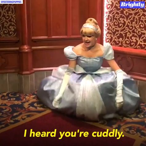 This service dog met Cinderella at Disneyland and he can't stop cuddling her