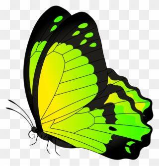 Butterfly Yellow Green Transparent Clip Art Image Butterflies Clip Art Transparents Png Download Butterfly Clip Art Butterfly Art Drawing Butterfly Art