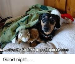 Image Result For Good Night Dachshund Dachshund Funny Dogs