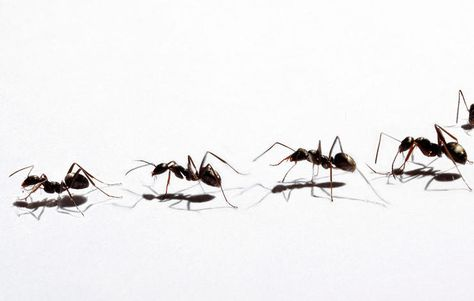 How to use kosher or table salt to get rid of ants in your