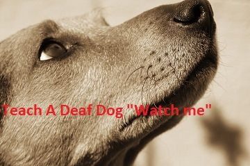Collars For Deaf Dogs How To Get Your Deaf Dog S Attention Deaf