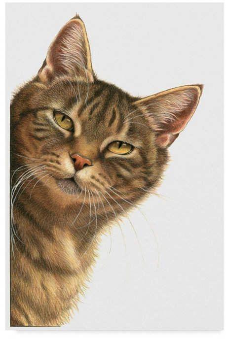 Katze Gemalt Cat Draw By Katharina Bornowski Katze Malen