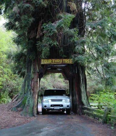 gotta hit up the redwood forest! <3 treeeeeeeeeeees http://www ...