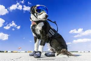 Piper Traverse City Airport Dog Yahoo Image Search Results Guard Dogs Dogs Border Collie