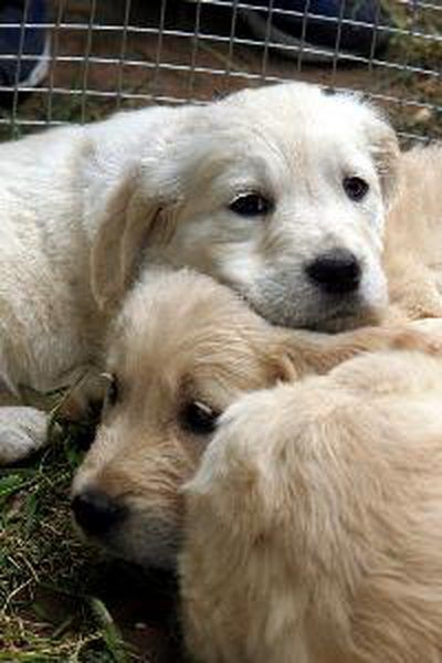 Your Adorable Pups Need Their Mother S Milk To Provide Them With