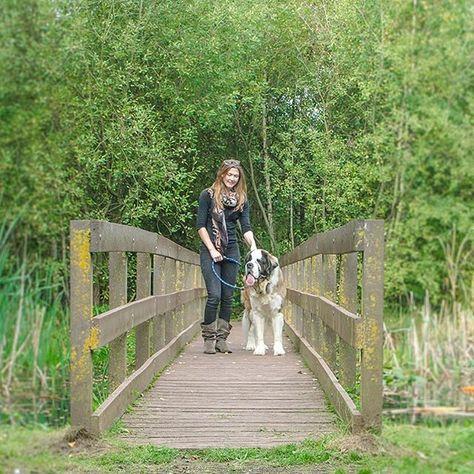 Lauren and Larry!  .  .  .  #stbernard #dog #dogs #dogsofinstagram #dogoftheday #doglove #doglover #pet #pets #petsofinstagram #instapet #picoftheday #instapic #instagood #mondaymotivation #Monday #lifestyle #cuteanimals #cute #gentlegiant