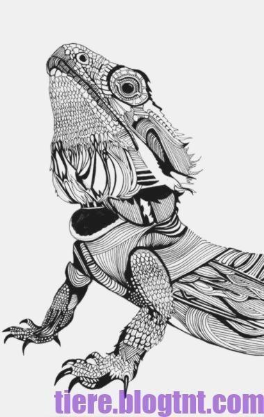 Drawing Reptiles Dragon Coloring Page Bearded Dragon Tattoo Bearded Dragon