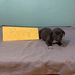 Available Pets At Mama Zoey Puppies Rescue In Romeoville