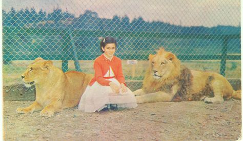 Postcard from the old Hertel's Zoo in Nanaimo