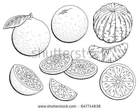 Orange Fruit Graphic Black White Isolated Sketch Illustration Vector Fruit Illustration Fruit Cartoon Fruit Sketch