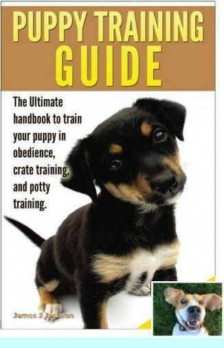 1 Puppy Training Great Dane And Dog Behavior Guide Check Out
