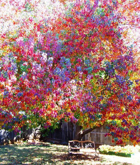 Rainbow tree by Linda Matson on 500px