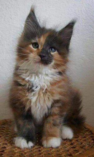 Exceptional Cute Cats Information Are Available On Our Site Look