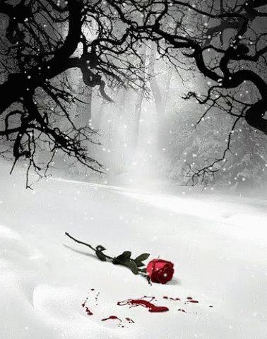 Romantico GIF - Romantico - Discover & Share GIFs