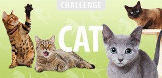 Multi Cat Self Filling Water Dispenser Pet Stairs Cats Litter Box