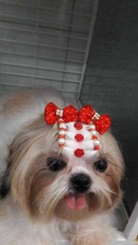 Pin Em Dogs Tosas Penteados