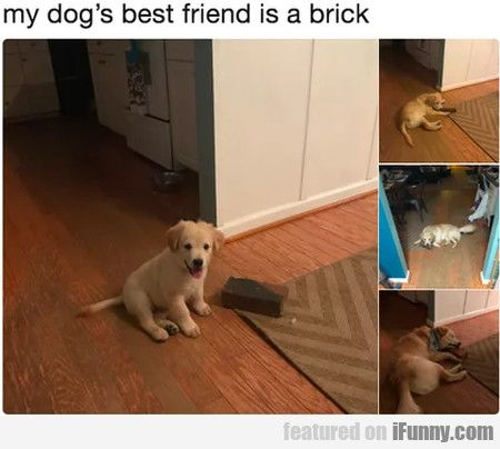 My Dog S Best Friend Is A Brick Dog Best Friend Dogs Cute