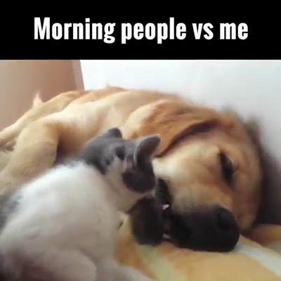 Please Wake Up I Am Gonna Boring.....
