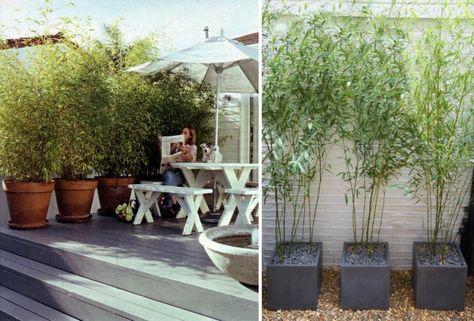 bambou-pot-terrasse-bacs-béton-banc-table-bois-blanc ...