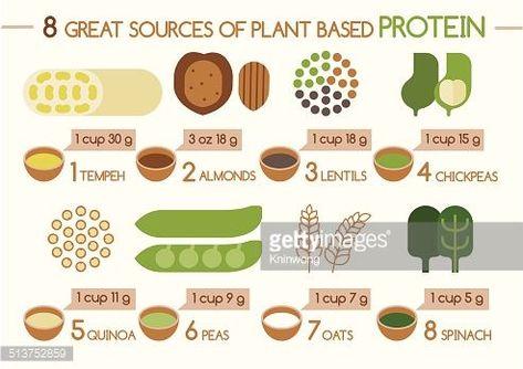 #Based #Illustrator #Plant #Protein #Protein Illustration #SOURCES 8 sources of plant based protein Illustrator