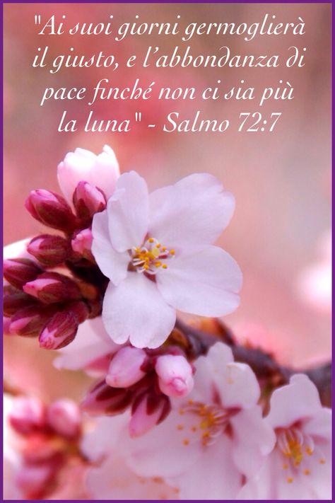 Fiore 7 Petali.Salmo 72 7 Immagini Di Fiori Sacre Scritture Immagini
