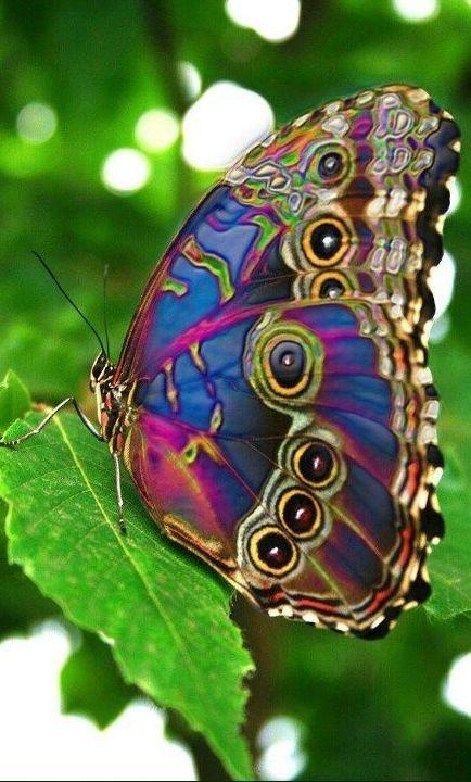 13 Butterflies ideas | beautiful butterflies, butterfly, beautiful bugs