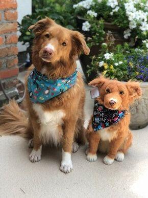 Custom Stuffed Animals Of Pets 100 Quality Guarantee Petsies Custom Stuffed Animal Pets Your Pet