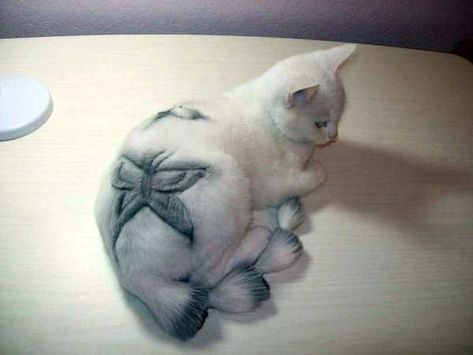 shaved-cats (2)