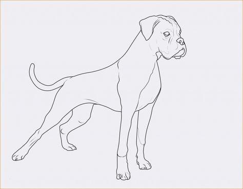 Ausmalbilder Katze Und Hund Ausmalbilder Hunde Bayern