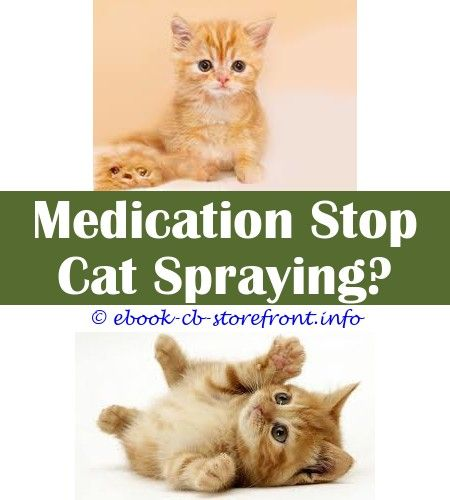 15 Impressive How To Stop My Cat Spraying Inside The House Cats Cat Urine Male Cat Spraying