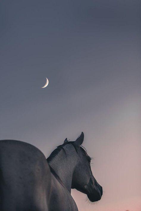 фон лошадь луна заставка телефон