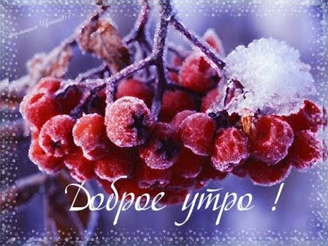 Доброе снежное утро прикольные картинки