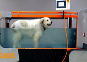 Water Therapy For Dogs Dog Care Cat Pictures For Kids Dog Medicine