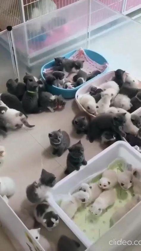 kittens 💕