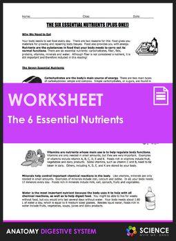 Worksheet The Six Essential Nutrients Nutrient Essentials Caveman Diet Food List