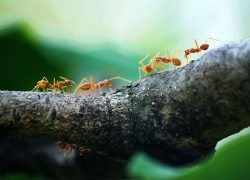 How To Get Rid Of Ants 3 Easy Steps To Success Kill Ants Get Rid Of Ants Rid Of Ants