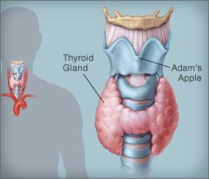 Thyroid Symptoms In Hindi With Images Thyroid Disorders