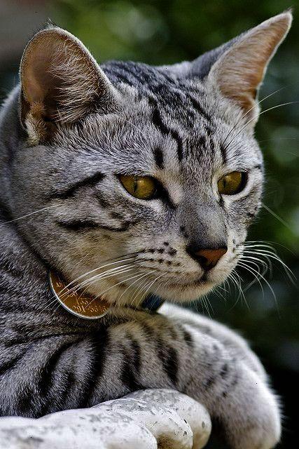 Neat Beautiful Cat Names Female Cute Cats Pretty Cats Beautiful Cats