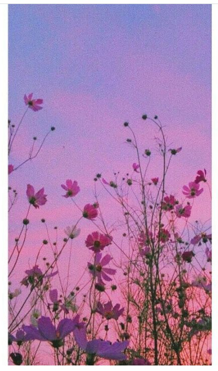 #aesthetic #sky #flowers #nature #background #sunset #clouds  https://weheartit.com/entry/325259319