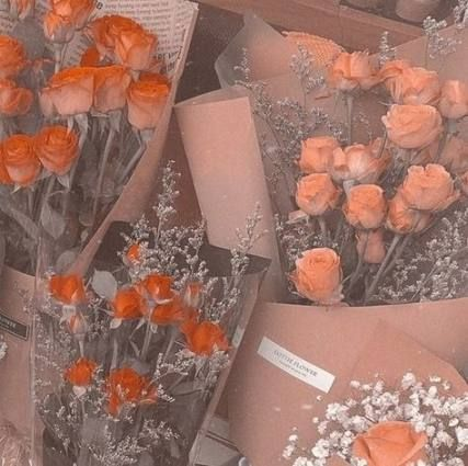 Flowers Black Background Photography Inspiration 70 Ideas Pastel Aesthetic Peach Aesthetic Aesthetic Themes