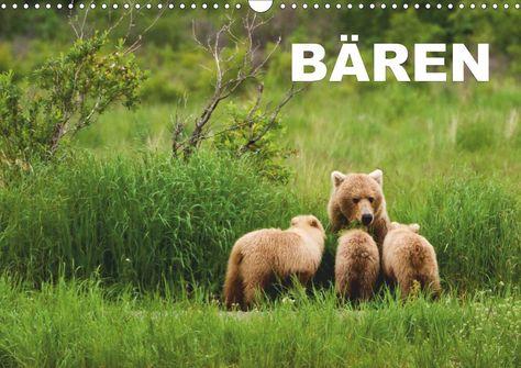 Flipart - Grizzlybären in ihrer natürlichen Umgebung. Beeindruckende Fotos dieser Spezie aufgenommen in der Wildnis Alaskas.