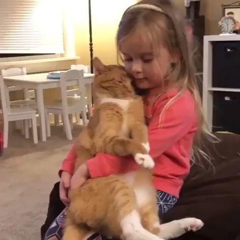 #aww #animals #cats #love #cute