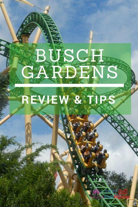 0c9994d9a6520896335348dd20b2f5a7 - How Crowded Is Busch Gardens Tampa