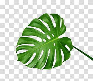 Green Aesthetic Green Leaf Transparent Background Png Clipart Green Aesthetic Transparent Flowers Leaves Illustration