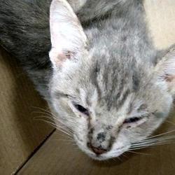 Austin Animal Center In Austin Texas Cat Adoption Cute Animals Animals