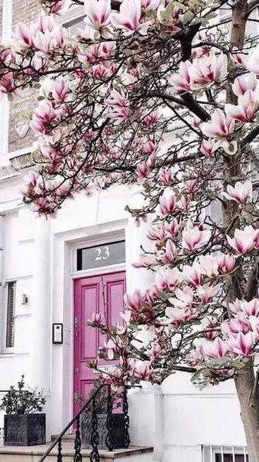 Magnolia In Bloom It Must Be Spring In England Beautiful Doors Exterior Front Door