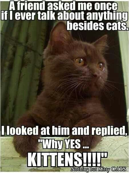 Best Funny Cat Stuff Images On Pinterest Crazy Cats Cats - 18 hilarious sad cat problems that might explain why your cats so moody