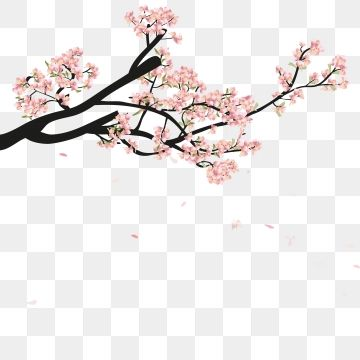 Sakura Blossom Hand Drawn Flower Watercolor Hand Branch Watercolour Spring Cherry Isolated White Nature Plum Beauty Pink Floral Garden Japanese P 벚꽃나무 아름다운 꽃 꽃