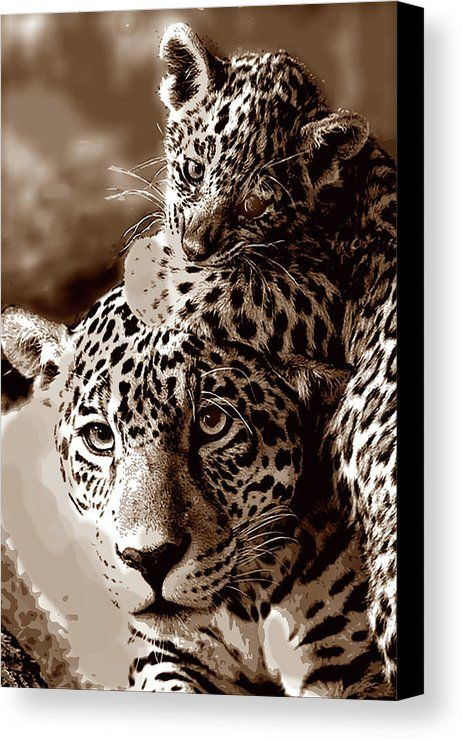 Monochromatic image of mother leopard with her cub. leopard, cat, wild, animal, baby, kitten, cub, spotted, zoo, Africa