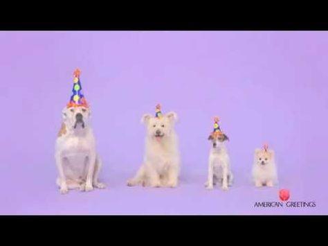 Starring Uggie! Woofy Birthday Ecard from American Greetings
